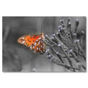 Αφίσα (τοπίο, πεταλούδα, φύση)